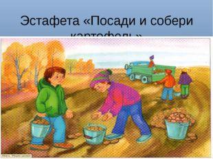 Эстафета «Посади и собери картофель»