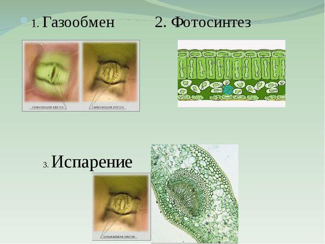 1. Газообмен 2. Фотосинтез 3. Испарение