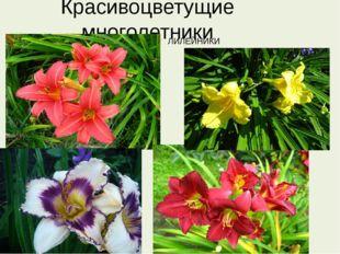 Красивоцветущие многолетники ЛИЛЕЙНИКИ