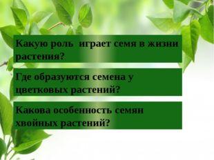 Какую роль играет семя в жизни растения? Где образуются семена у цветковых ра