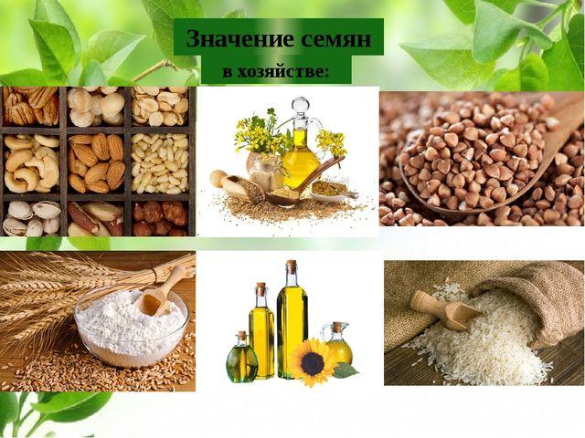 Значение семян в хозяйстве: