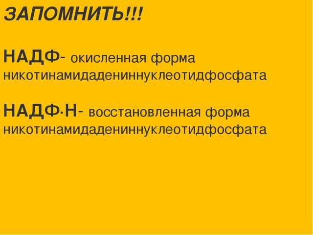 ЗАПОМНИТЬ!!! НАДФ- окисленная форма никотинамидадениннуклеотидфосфата НАДФ∙Н-...