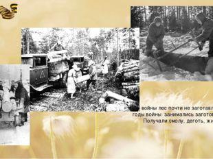 До войны лес почти не заготавливался. В годы войны занимались заготовкой леса
