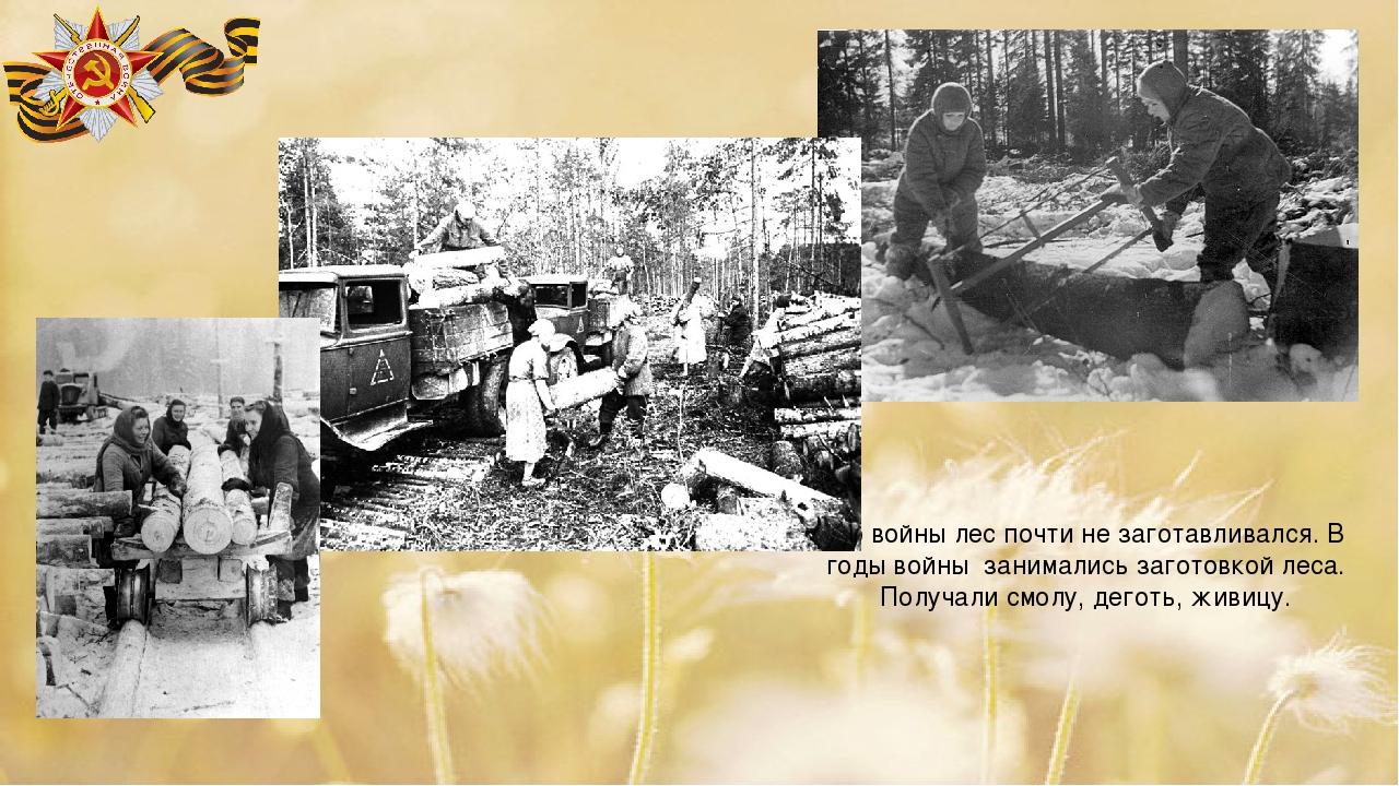 До войны лес почти не заготавливался. В годы войны занимались заготовкой леса...