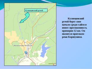 Кузнецовский ручей берет свое начало среди тайги и имеет протяженность приме
