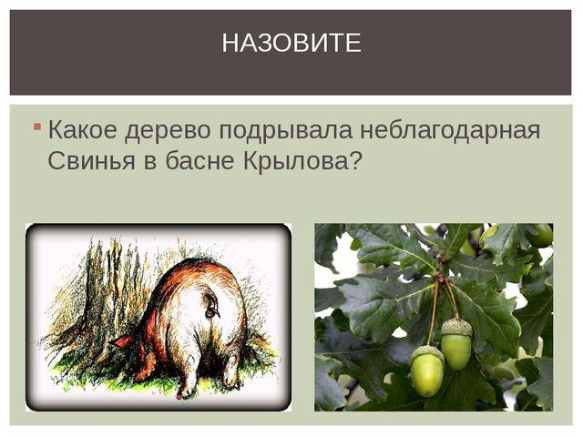 Какое дерево подрывала неблагодарная Свинья в басне Крылова? НАЗОВИТЕ