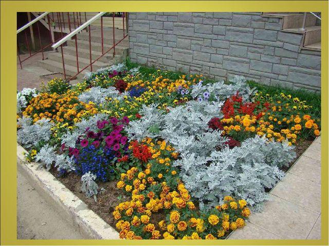 смотреть фото цветов на клумбах #11