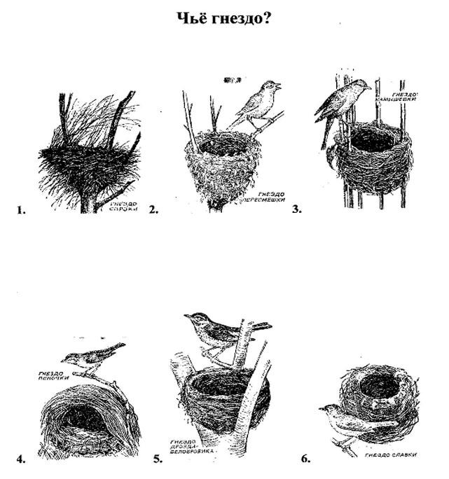 где чье гнездо картинки ученые составили