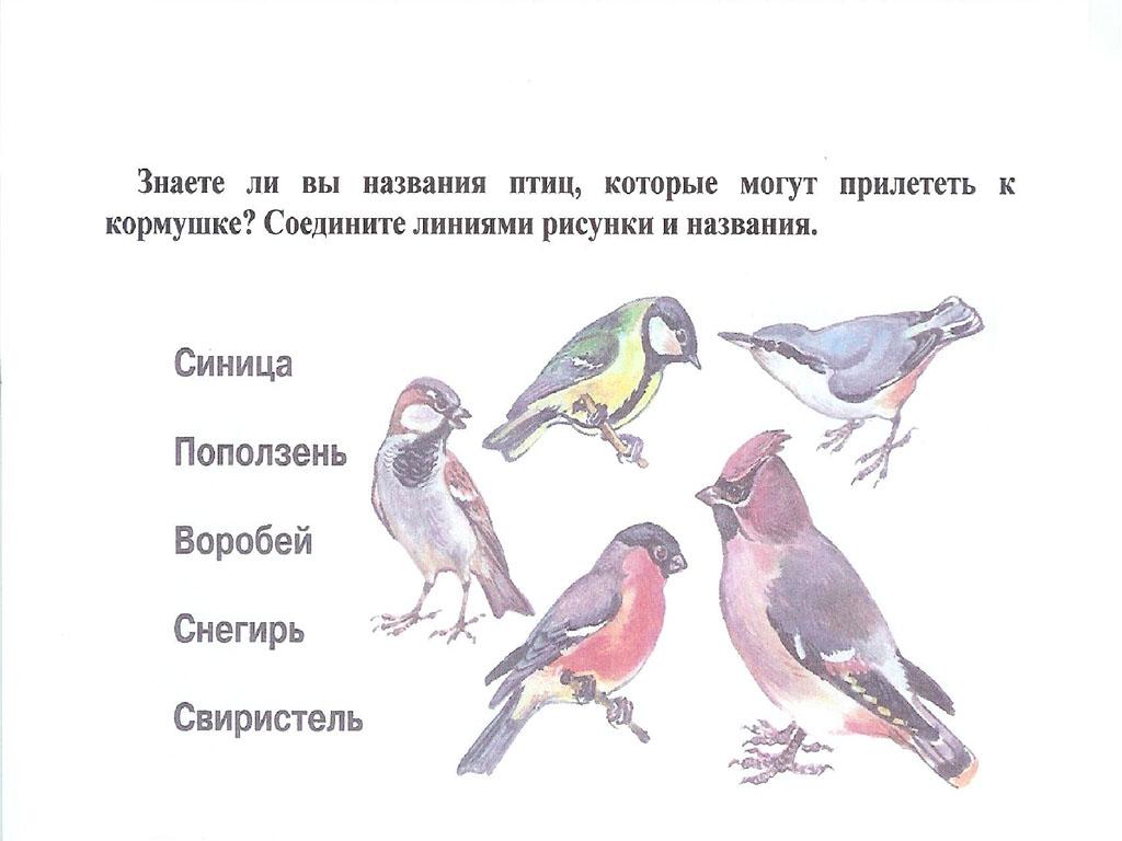современный викторина о птицах картинка автор может разместить