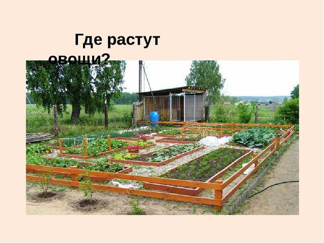Где растут овощи?