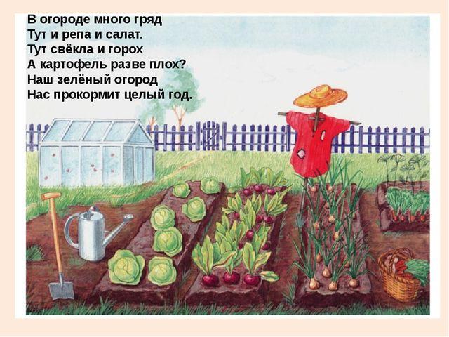 В огороде много гряд Тут и репа и салат. Тут свёкла и горох А картофель разв...