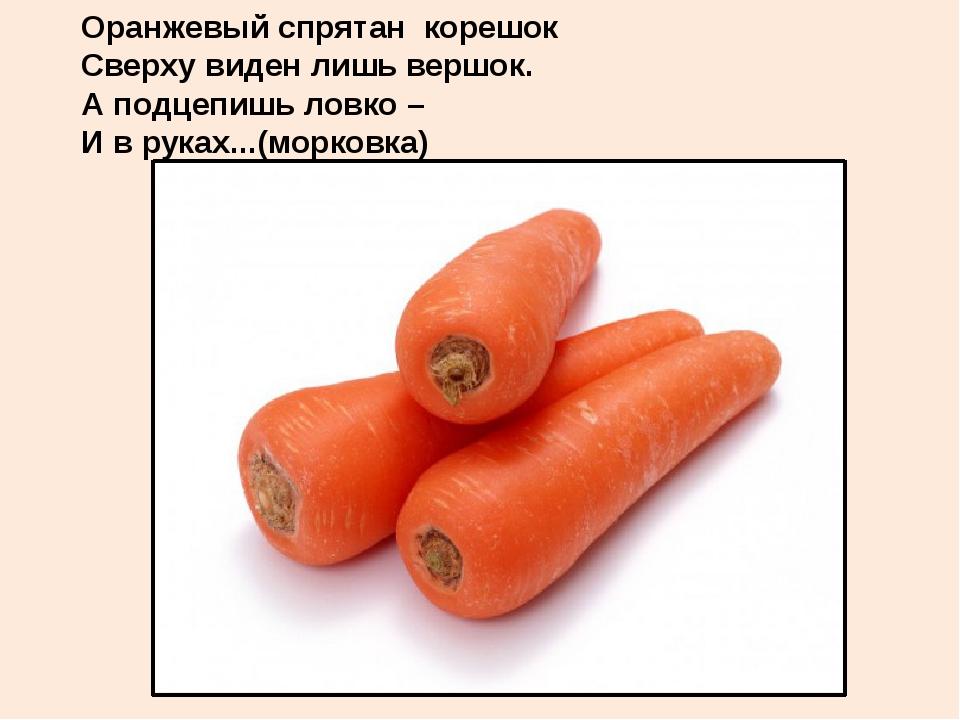 Оранжевый спрятан корешок Сверху виден лишь вершок. А подцепишь ловко – И в...