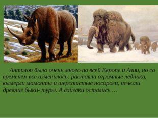 Антилоп было очень много по всей Европе и Азии, но со временем все изменилос