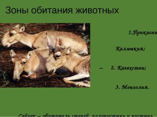Зоны обитания животных 1.Прикаспийская низменность – Калмыкия; – 2. Казахстан