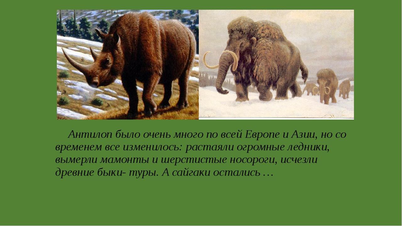 Антилоп было очень много по всей Европе и Азии, но со временем все изменилос...