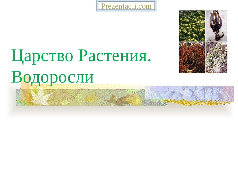 Царство Растения. Водоросли Prezentacii.com