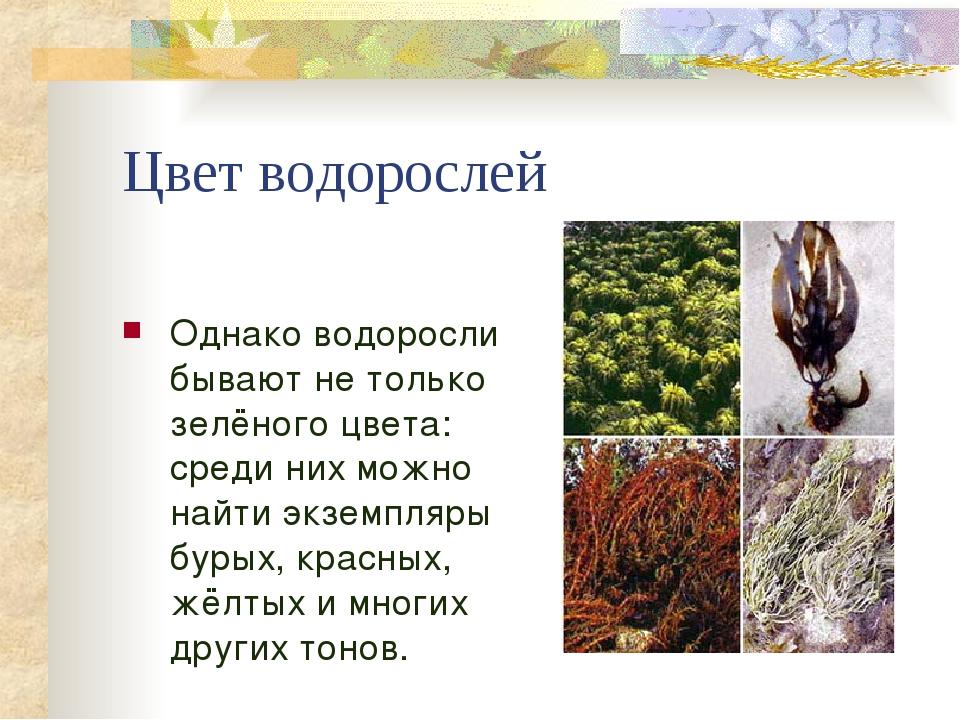 Цвет водорослей Однако водоросли бывают не только зелёного цвета: среди них м...