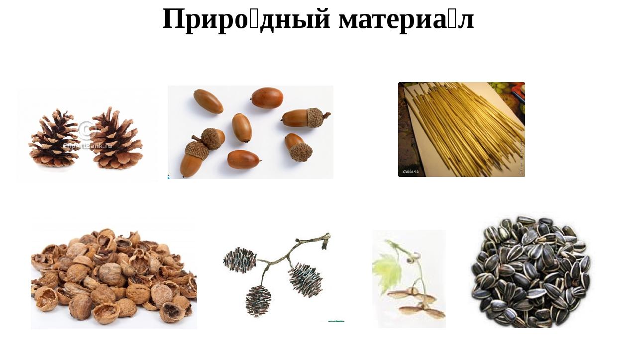 Приро́дный материа́л ши́шки жёлуди соло́мка оре́хи плоды́ ольхи крыла́тки се́...