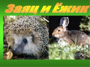Ёжик, все звери весной линяют – и барсуки, и лисицы, и белки, мы, зайцы…И тол