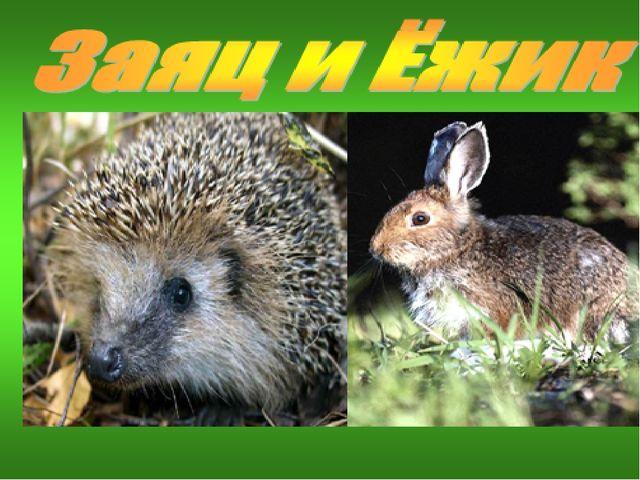 Ёжик, все звери весной линяют – и барсуки, и лисицы, и белки, мы, зайцы…И тол...