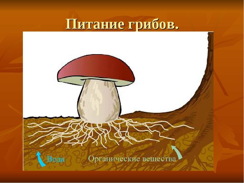 Питание грибов.