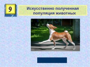 Искусственно полученная популяция животных Порода Автор: Русскова Ю.Б.