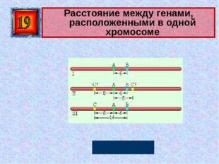 Расстояние между генами, расположенными в одной хромосоме Морганида Автор: Ру