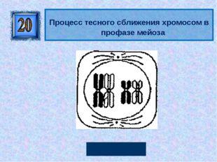 Конъюгация Процесс тесного сближения хромосом в профазе мейоза Автор: Руссков