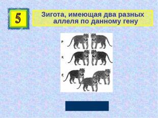 Зигота, имеющая два разных аллеля по данному гену Гетерозигота Автор: Руссков