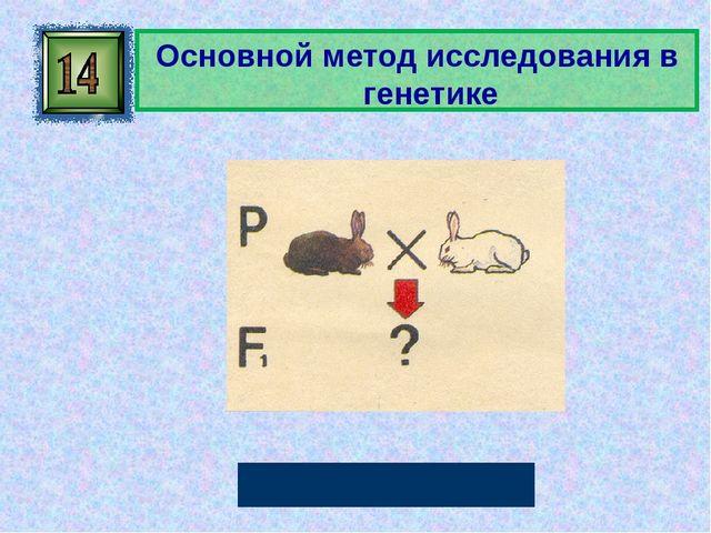 Основной метод исследования в генетике Гибридологический Автор: Русскова Ю.Б.