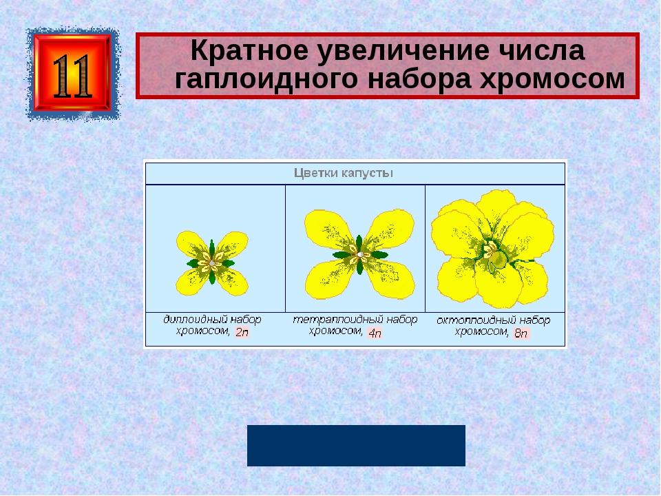 Кратное увеличение числа гаплоидного набора хромосом Полиплоидия Автор: Русск...