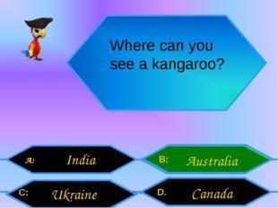 Внеурочная деятельность. Моя педагогическая инициатива. Where can you see a k
