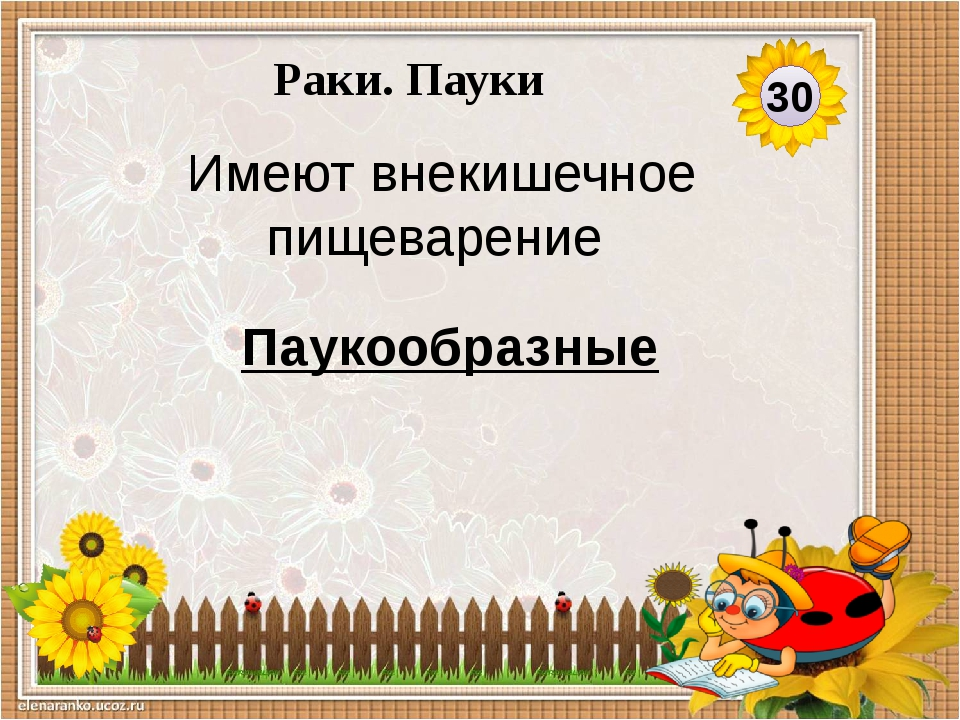 Паукообразные Имеют 8 ходильных ног 40 Раки. Пауки