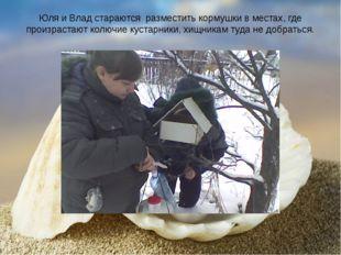 Юля и Влад стараются разместить кормушки в местах, где произрастают колючие к