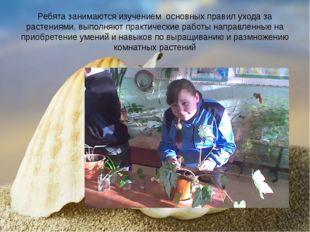 Ребята занимаются изучением основных правил ухода за растениями, выполняют пр