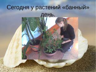 Сегодня у растений «банный» день.