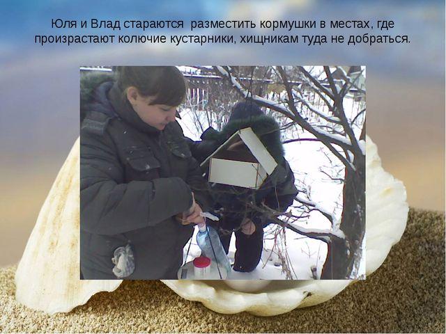 Юля и Влад стараются разместить кормушки в местах, где произрастают колючие к...