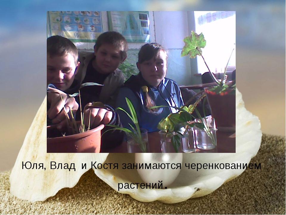 Юля, Влад и Костя занимаются черенкованием растений.