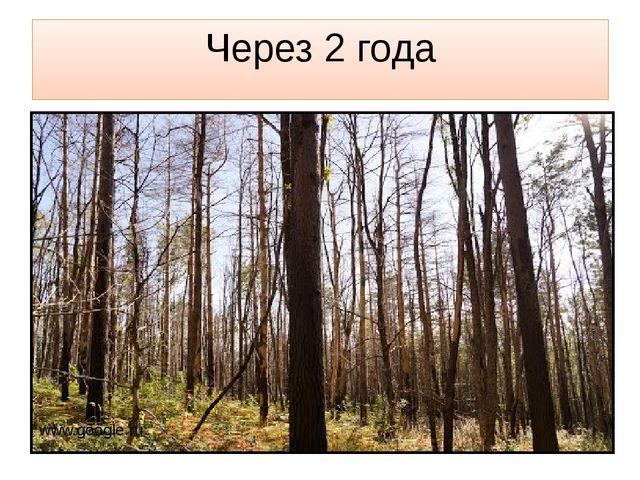Через 2 года www.google.ru