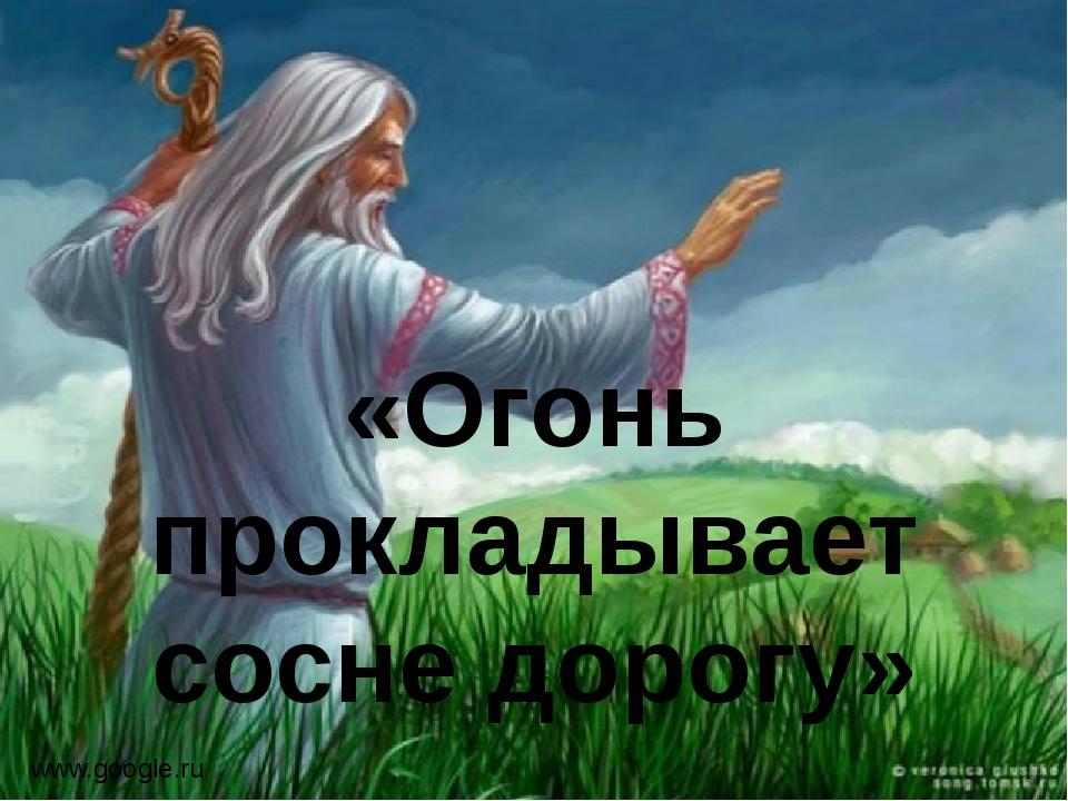 «Огонь прокладывает сосне дорогу» www.google.ru