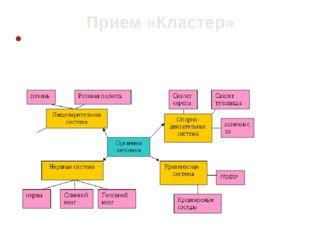 Прием «Кластер» Используется на стадии «осмысления», «рефлексии». Прием предп