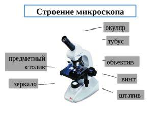 Строение микроскопа окуляр объектив тубус винт предметный столик зеркало штатив