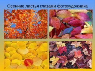 Осенние листья глазами фотохудожника