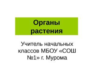 Учитель начальных классов МБОУ «СОШ №1» г. Мурома Органы растения