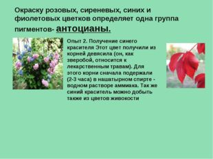Окраску розовых, сиреневых, синих и фиолетовых цветков определяет одна группа
