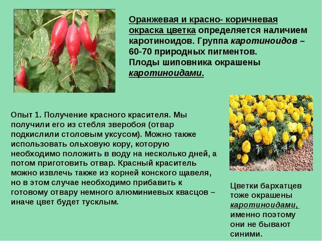 Оранжевая и красно- коричневая окраска цветка определяется наличием каротинои...
