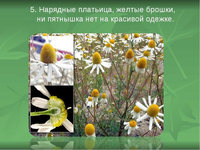 5. Нарядные платьица, желтые брошки, ни пятнышка нет на красивой одежке.