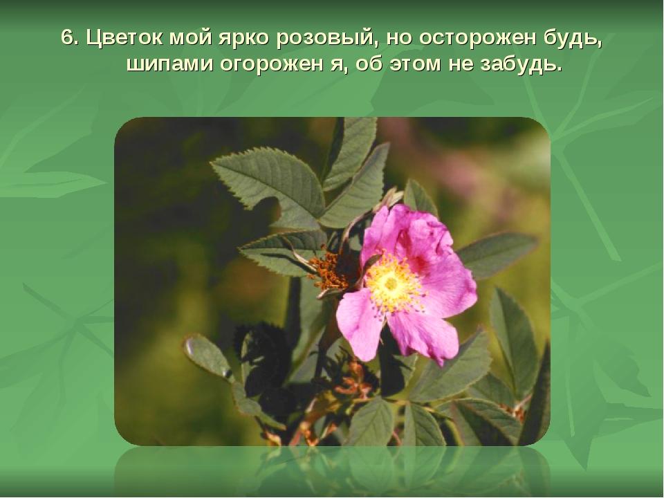 6. Цветок мой ярко розовый, но осторожен будь, шипами огорожен я, об этом не...