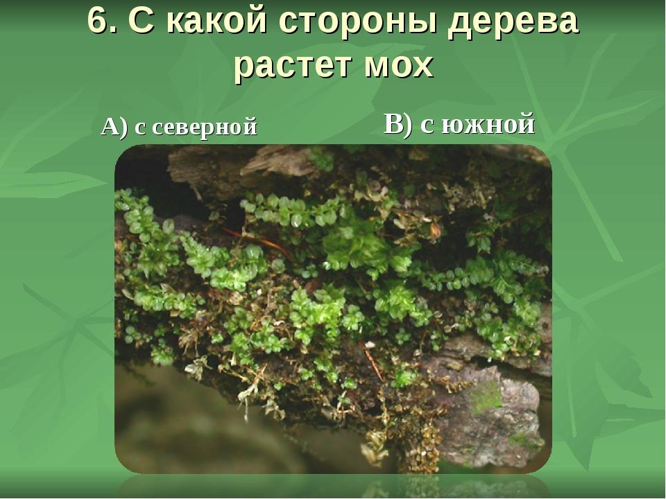 6. С какой стороны дерева растет мох В) с южной А) с северной