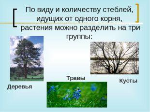 По виду и количеству стеблей, идущих от одного корня, растения можно раздели